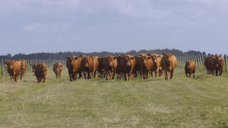 Sacramento Farms